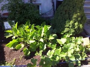 Mine and France's garden